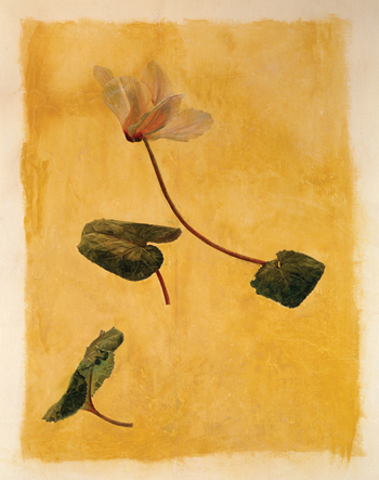 The rendering of a cyclamen bloom, in a home in southwest England, is one of two wall paintings by Lucian Freud known to survive.