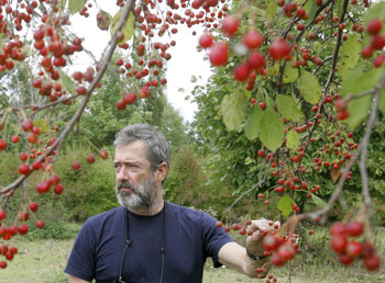 Tony Feher with crab-apple trees in Rockford, Illinois.