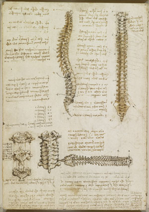 One of Leonardo da Vinci's anatomical drawings from ca. 1510–11, on view at the Palace of Holyroodhouse.    ©2013 HER MAJESTY QUEEN ELIZABETH II/ROYAL COLLECTION TRUST