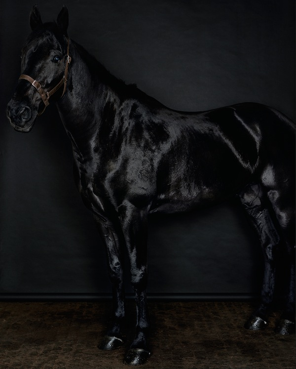 Sarah Jones, Horse (profile) (black) (II/I), 2014, C Print. COURTESY ANTON KERN GALLERY, NEW YORK.