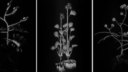 Photography the Whitney Biennial: Hidden Plain