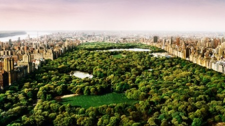 Shoot Central Park Artfully: 7 Photographers'