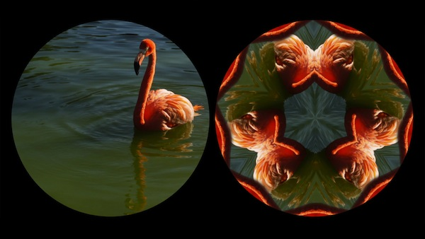 leslie_thornton_flamingo_600