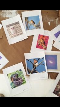 bird_printouts_1