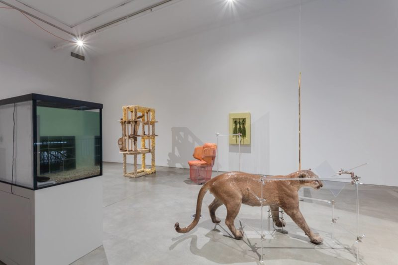 Installation View Of Dolores At Team Gallery Courtesy