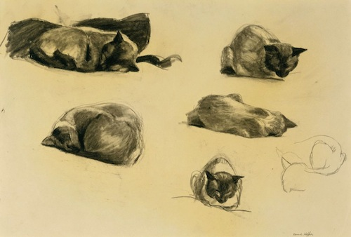 Edward Hopper, Cat Study, 1941, Conté crayon on paper, 15 x 21 ¾ in. THE MUSEUM OF FINE ARTS, HOUSTON/THE ALVIN S. ROMANSKY PRINTS AND DRAWINGS ASSOCIATION ENDOWMENT FUND AND THE MARJORIE G. AND EVAN C. HONORING PRINT FUND.