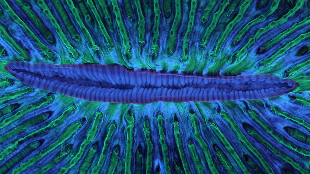 Deep Listening: Animal Collective & Coral Morphologic Dive Deep into Tangerine Reef