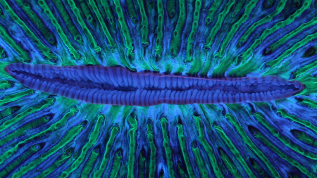 Deep Listening: Animal Collective & Coral