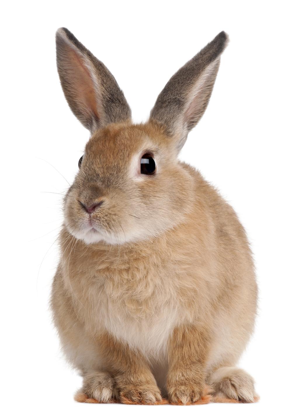 Morning Links: $91.1 M. Rabbit Edition