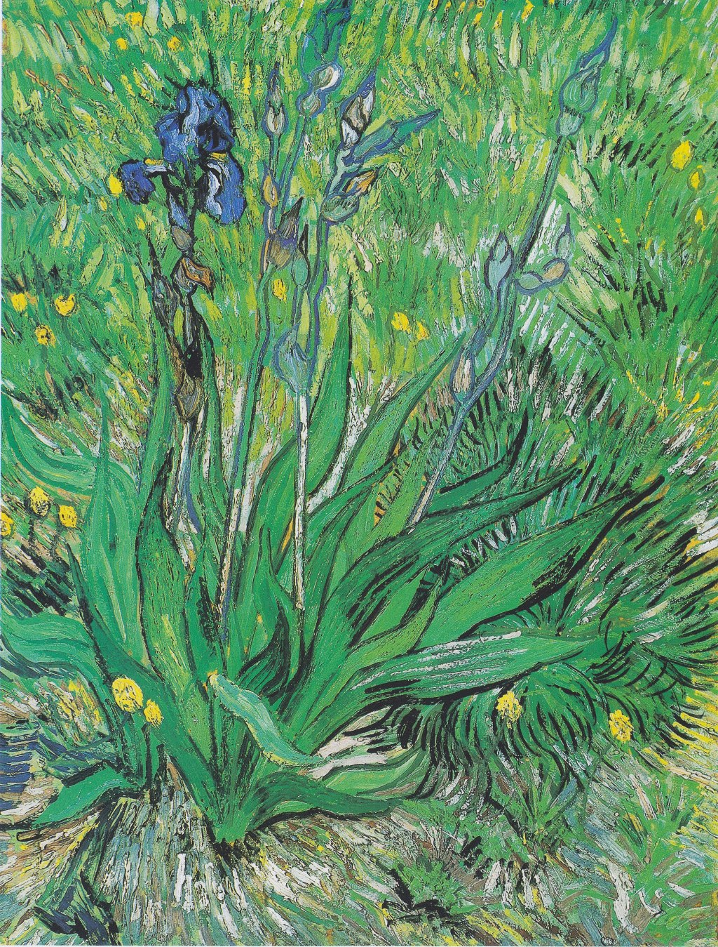 Vincent van Gogh, 'Iris,' 1890, oil on thinned cardboard, mounted on canvas.