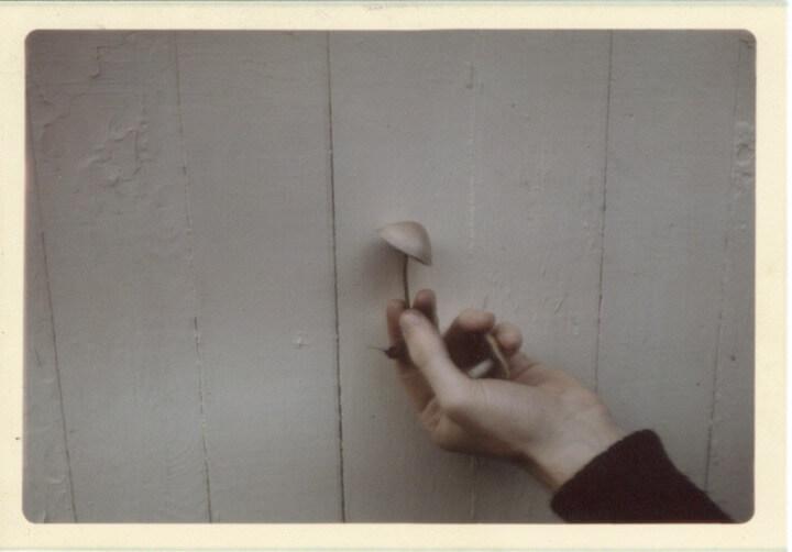 John Cage, Man of Music—and Mushrooms