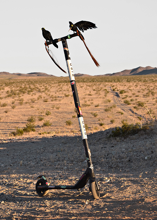 Two taxidermied crows perch on a scooter in a scrubby desert landscape
