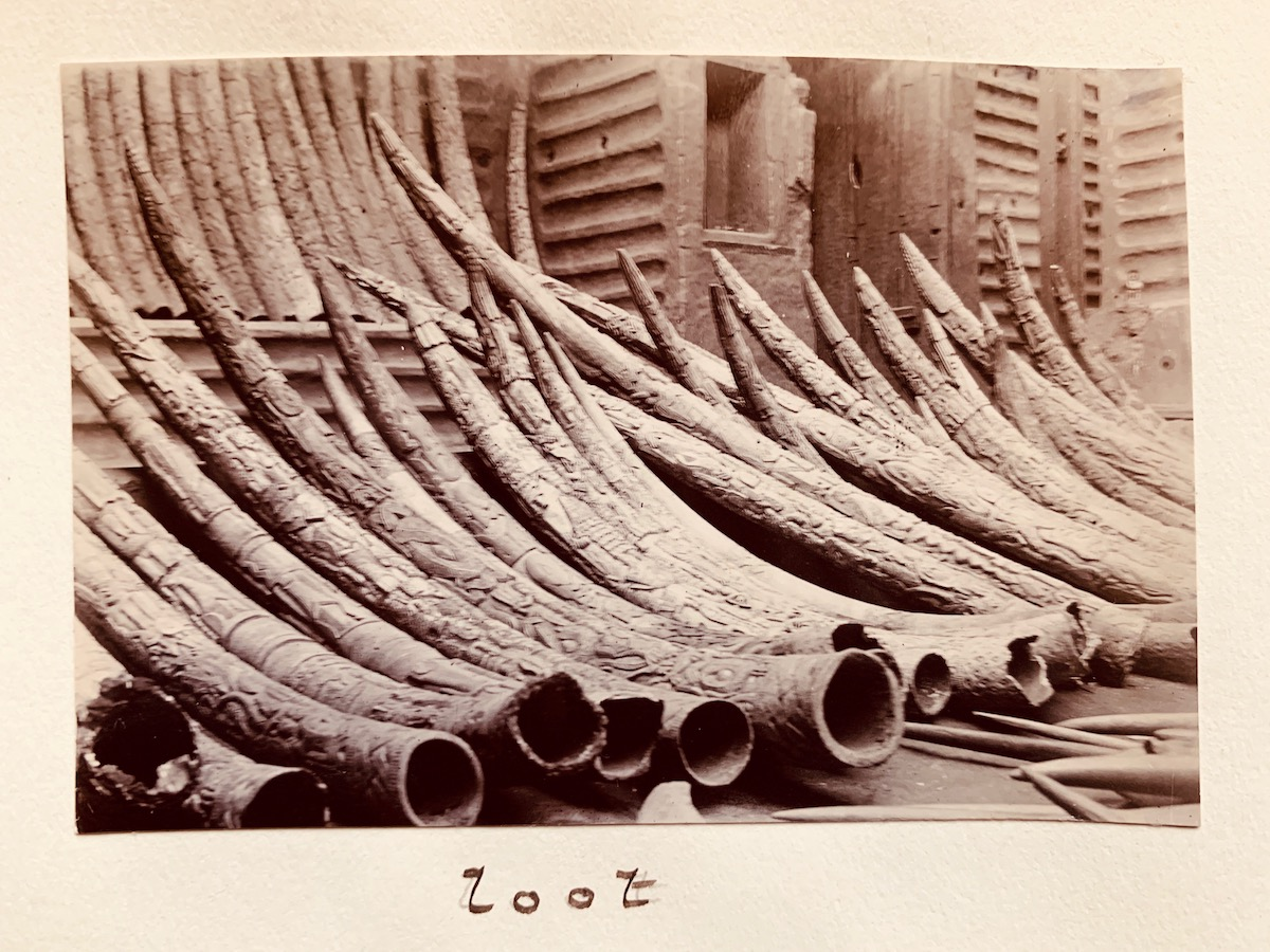 A series of tusks are lined up against a wall with the word 'loot' written beneath them.