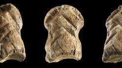 A carved foot bone from a giant deer found in the Unicorn Cave, 2021.